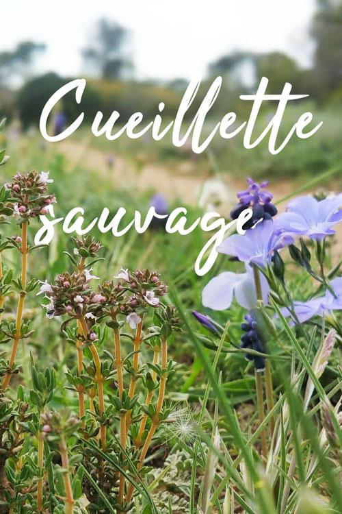 cueillette_sauvage
