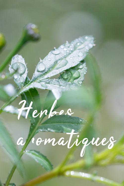 titre-plantes-aromatiques