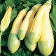 courgettes-zéphyr